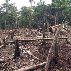 Slash and burn agriculture in the Amazon - Matt Zimmerman